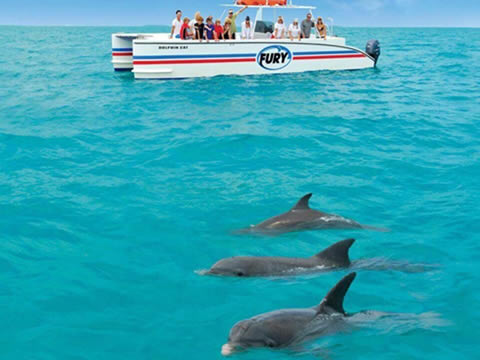 DOLPHIN WATCH ECO TOUR