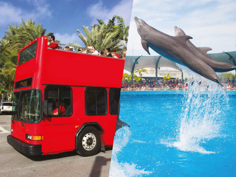 MIAMI DOUBLE DECKER + SEAQUARIUM